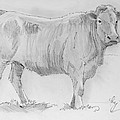 Cow Pencil Drawing by Mike Jory