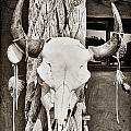 Cow Skull by Bryan Mullennix