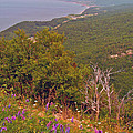 Cow Vetch In Cape Breton Highlands Np-ns by Ruth Hager