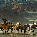 Cowboy Driving Horses by John Shaw