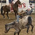 Cowboy Hang On by James Gordon Patterson