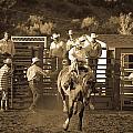 Cowboy by Jordan Kaplan