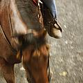 Cowboy by Margie Hurwich