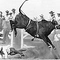Cowboy Riding A Bull by Underwood Archives