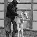 Cowboy Steadies Foal by Carol Walker