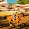 Cowboys Ride And Rope Cattle During San by Panoramic Images