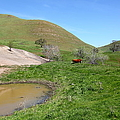 Cows Along The Rolling Hills Landscape Of The Black Diamond Mines In Antioch California 5d22304 by Wingsdomain Art and Photography