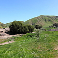 Cows Along The Rolling Landscapes Of The Black Diamond Mines In Antioch California 5d22291 by Wingsdomain Art and Photography