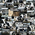 Cows Collage by Thomas Woolworth