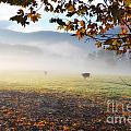 Cows In The Fog by Mats Silvan