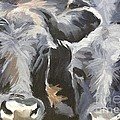 Cows In Waiting by Katrina West