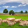 Cows On The Green Field by Mats Silvan