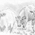 Cows Pencil Drawing by Mike Jory