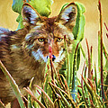 Coyote In The Aloe by David Wagner
