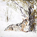 Coyote In The Snow by Sandy Brooks