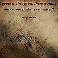 Coyote Proverb by Dan Sproul