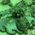 Cozumel Octopus by Adam Jewell