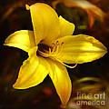 Cozy Yellow Daylily by Carol Groenen