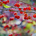 Crab Apples 2 by Scott Campbell