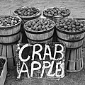 Crab Apples by Bill Cannon