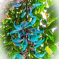 Crab Claw Vine In Kula Maui by Roy Bendell