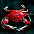 Crab by Karen Sheltrown
