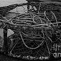 Crab Pot by Chalet Roome-Rigdon