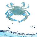 Crab Strolling Around by Art Spectrum
