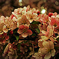 Crabapple In Bloom by Mary Machare