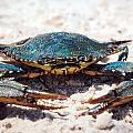 Crabby Crab by Sennie Pierson