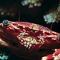 Crabs 1 by Dawn Eshelman