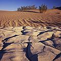 Cracked Mud - Sand Ripples by Tom Daniel
