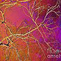 Crackling Branches by Meghan at FireBonnet Art