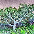 Craggy Gardens North Carolina Blue Ridge Parkway Autumn Nc Sceni by Alex Grichenko