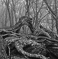 Craggy Roots by Matt McClintock