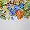Cran-grapes by Gregory Peters