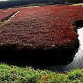 Cranberry Bog by David DeCenzo