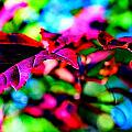 Cranberry Leaf by Tracie Howard
