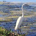 Crane At Pond by Ed Weidman