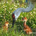 Crane Family Portrait by Photos By  Cassandra