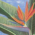 Crane Flower Paradise by Diana Hrabosky