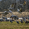Crane Landing Strip by Wes and Dotty Weber