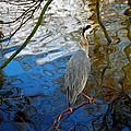 Crane Perching 1 by John Magnet Bell