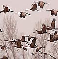 Cranes Across The Sky by Don Schwartz