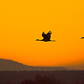Cranes In Flight At Sunset by Mike Dodak