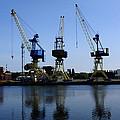 Cranes On The River Bank by Aidan Moran