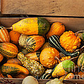 Crate Filled With Pumpkins And Gourts by Iris Richardson