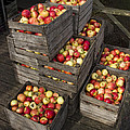 Crated Apples by Randall Nyhof
