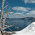 Crater Lake Tree by Greg Nyquist