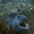 Crazy Catfish. by Erlendur Gudmundsson